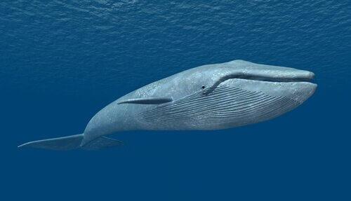 un modello 3d di una balena bianca