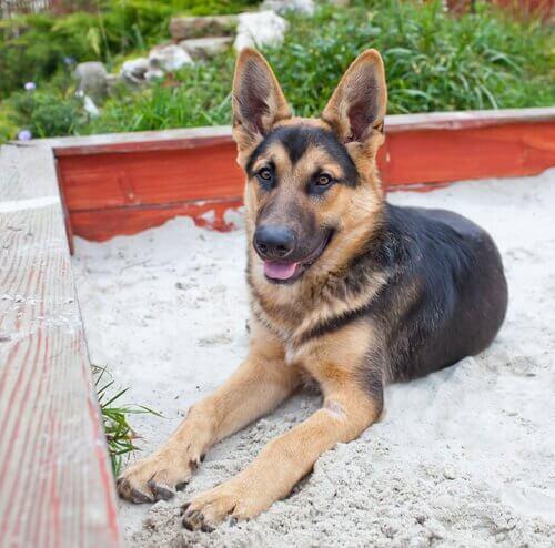 Addestrare il cane a usare la lettiera in 4 passi