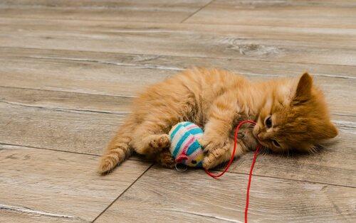 un piccolo gattino gioca con una pallina legata a un filo