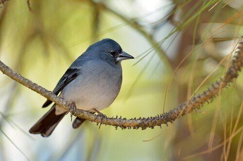 Quali sono gli animali delle isole Canarie?