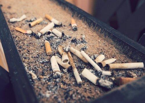 Sigarette e animali: i pericoli del fumo passivo