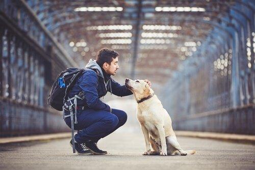 Visitare gli Stati Uniti con il cane: 5 percorsi da non perdere