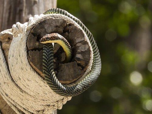 I 6 serpenti più colorati del mondo