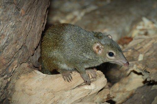 un toporagno esce dalla sua tana
