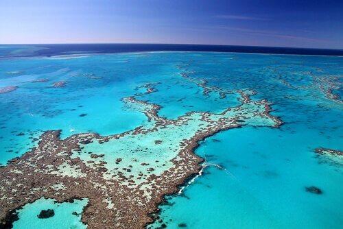 una barriera corallina nell'oceano vista dall'alto