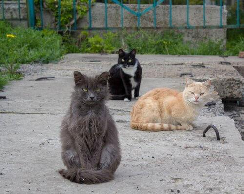 Colonia di gatti per strada
