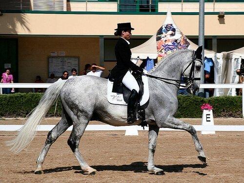 Competizione di dressage con fantina e cavallo grigio