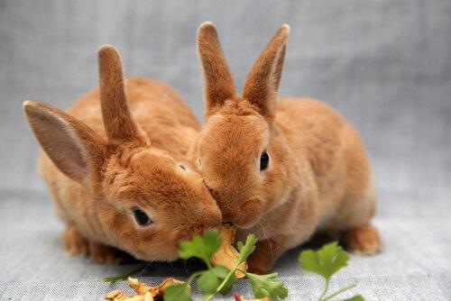 una coppia di coniglietti mangia delle foglie