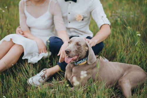 Coppia di sposi con un cane in un prato