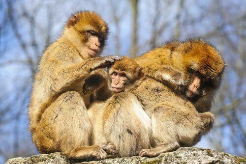 La struttura sociale delle scimmie