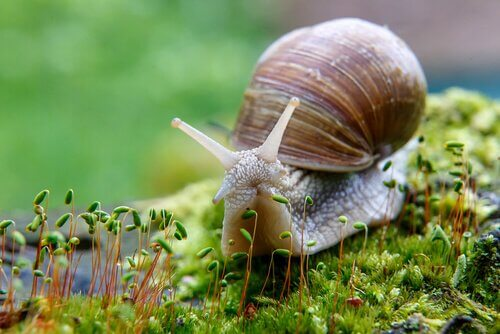 Lumaca vista da vicino mentre mangia erba