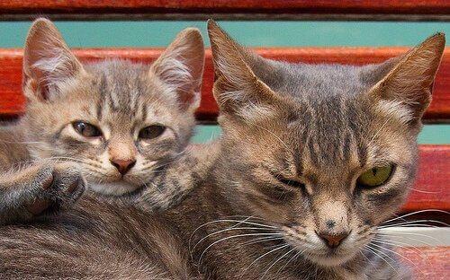 una mamma gatta con un cucciolo appoggiato sulla schiena
