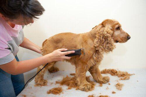 Tosare il cane: meglio in casa o in un centro toelettatura?