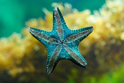 una stella marina appoggiata su un cristallo