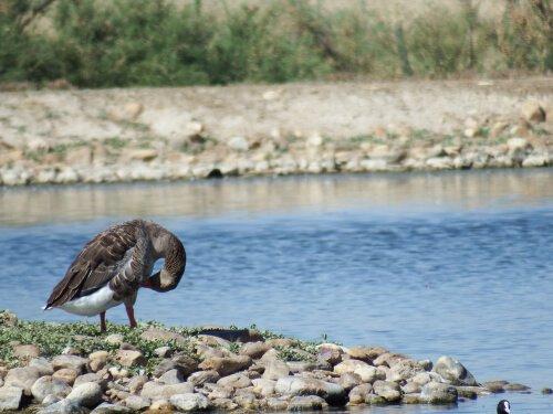 8 consigli per osservare la fauna selvatica