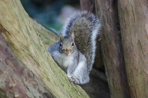 Tipi di scoiattoli: caratteristiche e differenze
