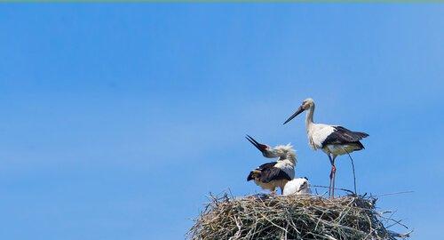 Klepetan e Malena nel nido