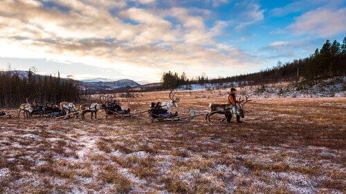 Ultimi pastori di renne