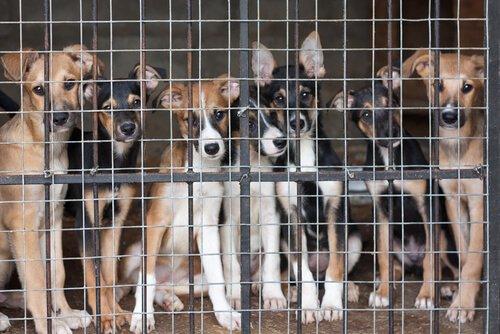 alcuni cani dietro le sbarre di un canile