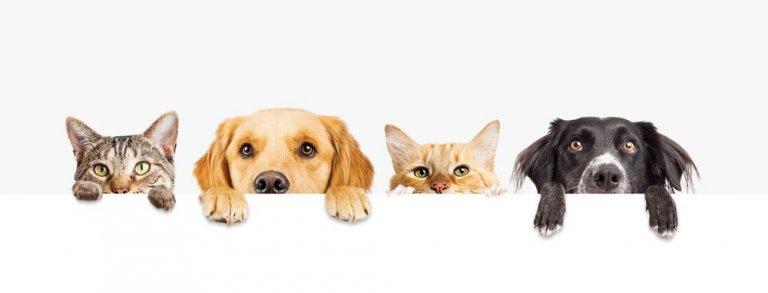 Frasi e proverbi sugli animali che dovete conoscere