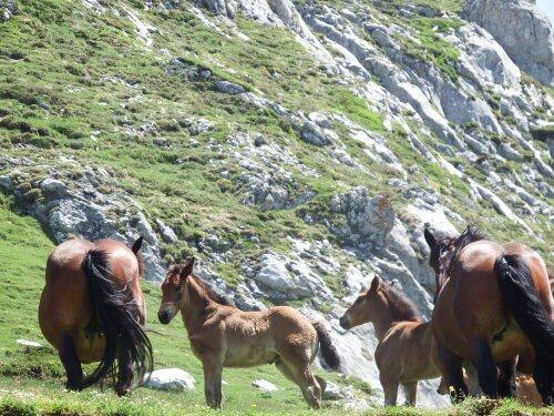 Cavalli pascolano liberi alle pendici di un monte
