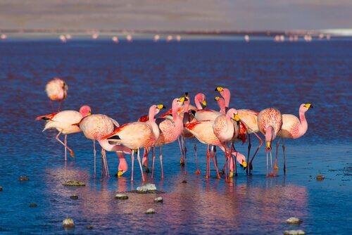 Fenicotteri rosa pescano in un lago