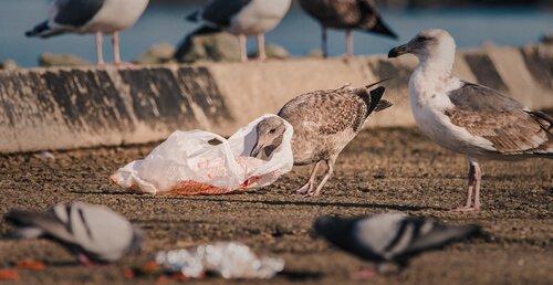 Cambiamento climatico e plastica minacciano gli uccelli marini
