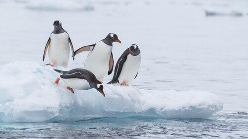 Pinguini su un blocco di ghiaccio