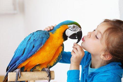 Il comportamento del pappagallo dentro casa
