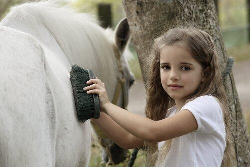 Come prendersi cura del mantello del cavallo