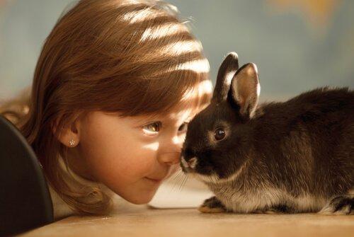 Consigli utili per allevare conigli in modo corretto