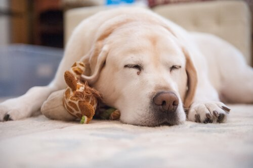 Cosa fare se il cane non dorme?