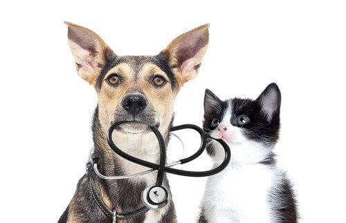 Cane e gatto con uno stetoscopio