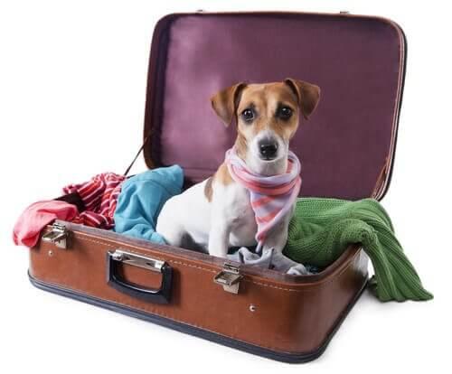 Cangolino in una valigia aperta