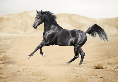 Fauna della penisola arabica
