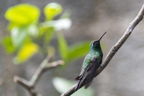 I 5 uccelli più piccoli al mondo