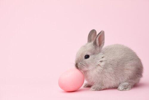 Coniglio con uovo rosa