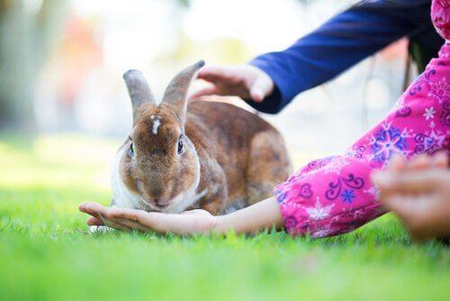 Bambini coccolano un coniglio sul prato