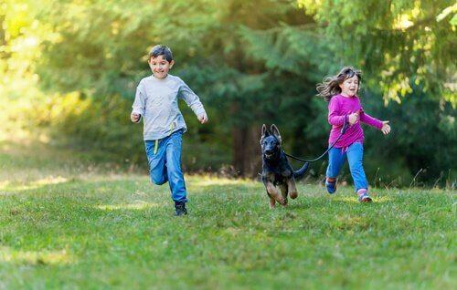 Bambini corrono con un pastore tedesco sul prato