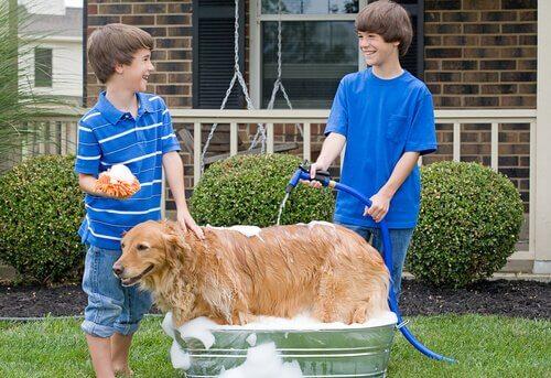 Consigli per lavare il cane con la pompa del giardino