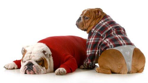 Disfunzione erettile nei cani