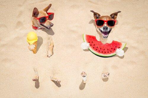 Cosa fare se il cane non mangia per il caldo?