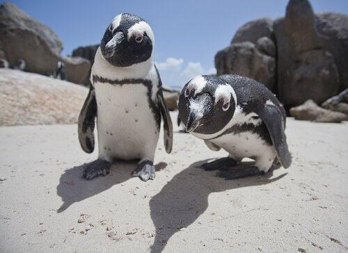 Quante specie di pinguini ci sono?