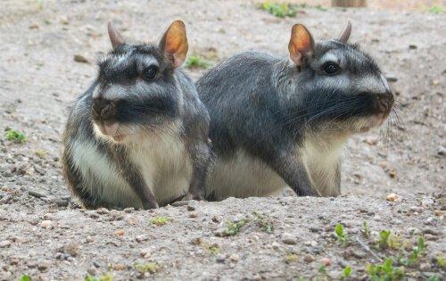 5 imperdibili animali che vivono nella prateria