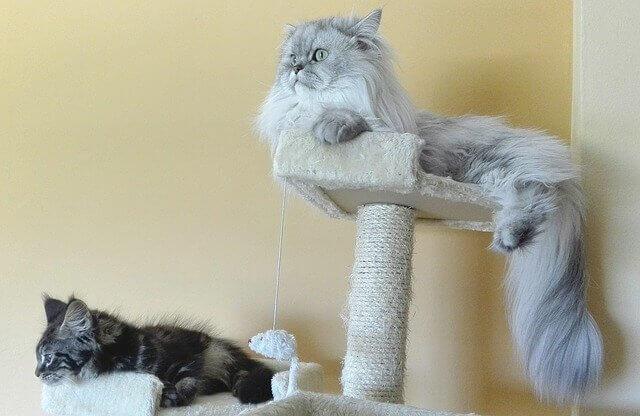 Due gatti appoggiati su due tiragraffi