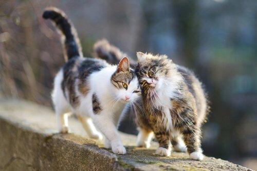 Gatti randagi si coccolano su un muro