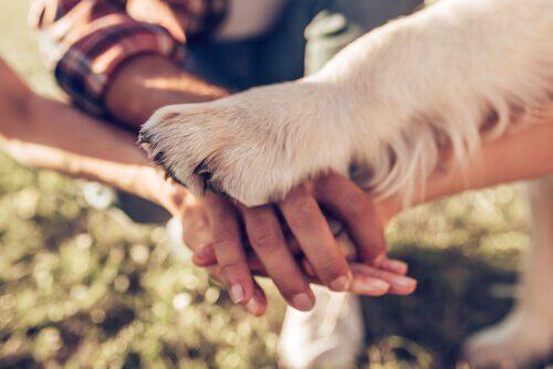 Mani di ragazzi e zampa di cane