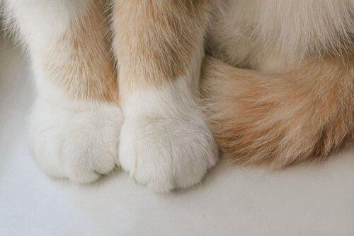 Zampette di un gatto viste da vicino