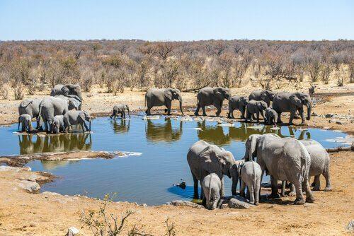Elefanti nel parco nazionale di Etosha