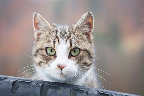 Perché il vostro gatto vi fissa?